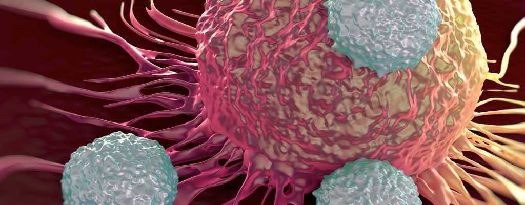 Neues Zielmolekül gegen Krebs