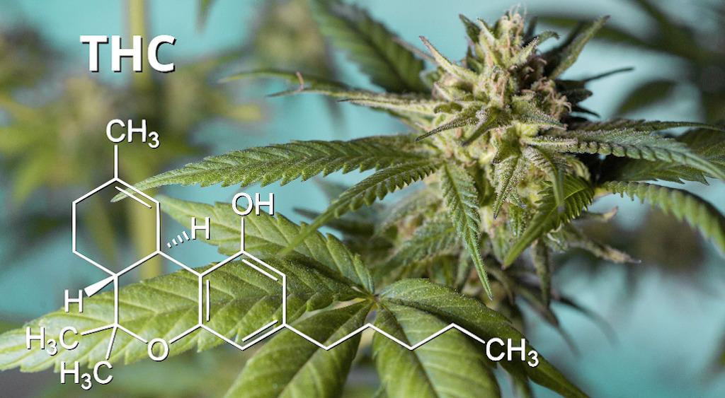 Zuger Unternehmen: Lizenz für THC-haltige Cannabispräparate